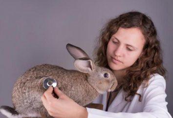 Wirusowej krwotocznej chorobie królików: opis, powodujące, leczenia i szczepienia