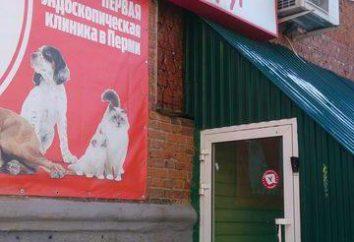 """clínica veterinaria """"amigo"""", Perm: direcciones, servicios. veterinario hora"""