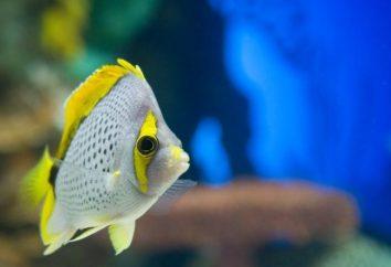 Ryby akwariowe dla początkujących: co wybrać?