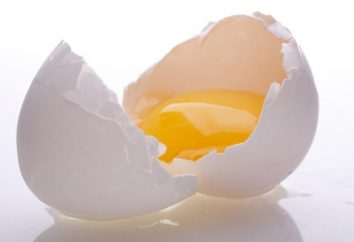 Egg Protein: co to jest?