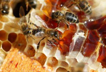 Produit poésie: miel de bruyère
