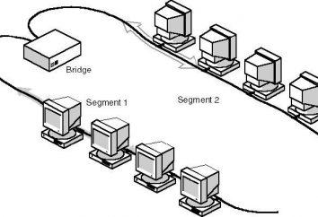Segment – część sieci