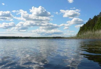 Pendikovskoe See: Beschreibung, Ferien, Foto