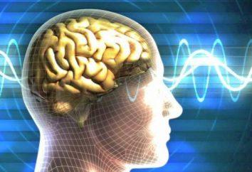 Le cerveau du milieu: fonctions et structure. Fonctions du cerveau moyen et du cervelet