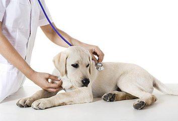 Veterinärklinik von Chabarowsk – rund um die Uhr Hilfe für Haustiere