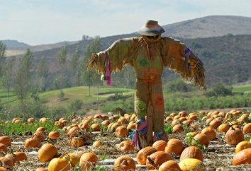 Doprowadzić Scarecrow ręce – sobie i dzieciom wakacje!