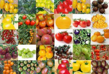 La pianta è determinante. pomodori determinato – che cos'è?