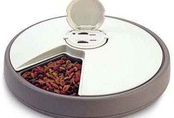 alimentador automático de fabricación casera para gatos. comedero automático para gatos: opiniones