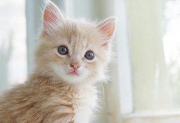 Les scientifiques ont finalement été en mesure de déchiffrer les expressions faciales des chats