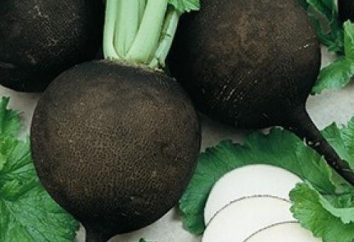 Proprietà utili di ravanello e del suo uso in malattie
