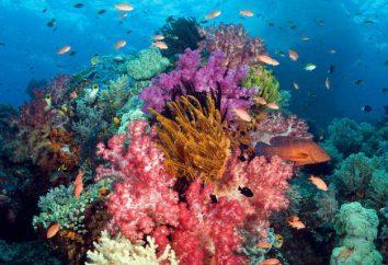 Corales – esto … coral natural: la imagen, el precio