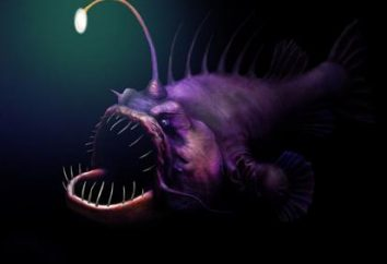 Monstre of the Deep: poisson-diable