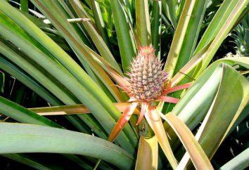 Tipi di piante: l'elenco (3 classi). Tipi di piante da interno: elenco, foto