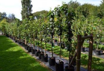 """società Giardinaggio """"Sadko"""" – il vivaio di piante da frutto e ornamentali"""
