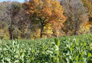 Comment démarrer une ferme? Plan d'entreprise agricole