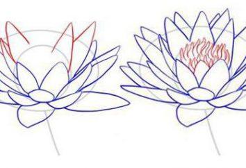 Jak narysować Lotus: przewodnik dla początkujących