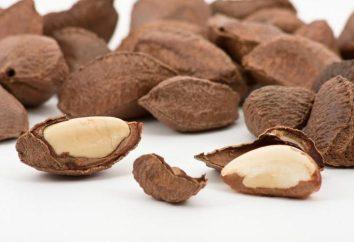 Paranüsse: Kaloriengehalt und Eigenschaften