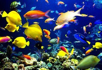 Filtro para o aquário – uma garantia de beleza e conforto do lar para casas de peixe