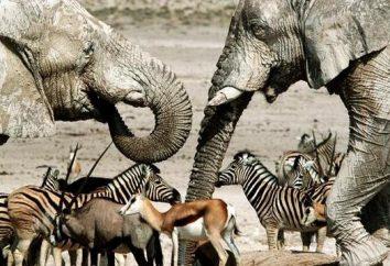 Chi sono mammiferi e come sono differenti dagli altri animali?