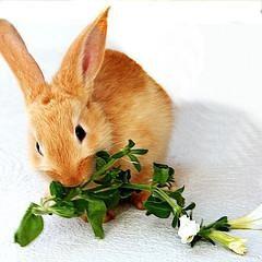 lapin décoratif: qui mange ce charmant animal de compagnie
