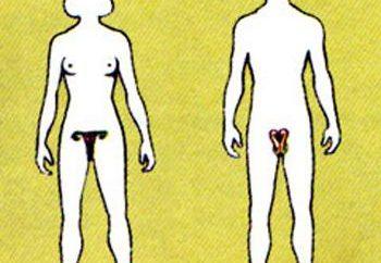 sistema riproduttivo: la malattia. Il sistema riproduttivo femminile. Gli effetti dell'alcol sul sistema riproduttivo maschile