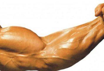 Biceps nicht wächst: Was tun? Lifting Hanteln für Bizeps sitzen. Wie der Bizeps zu Hause bauen