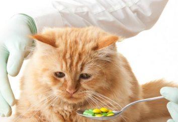 Wie man einer Katze eine Pille geben: Tipps und Tricks