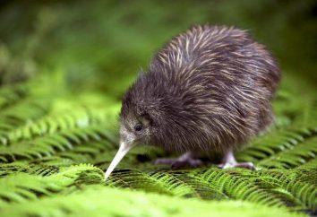 Zwierzęta Nowa Zelandia: Opis i zdjęcia