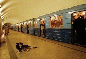 "Metro ""China Town"": mergulhar na história"