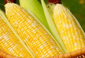Perché il sogno di mais: le diverse versioni dei libri da sogno