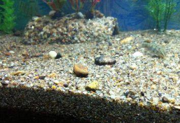 Rivière à grain grossier dans l'aquarium. Recommandations pour choisir le sol
