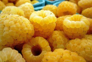 """Framboesa """"gigante amarelo"""". Descrição da variedade, revisões"""