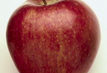"""Apfelbaum """"Gloster"""": eine Beschreibung der Sorte, Foto"""