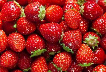 Comment stocker les fraises à la maison: un examen des méthodes et recommandations