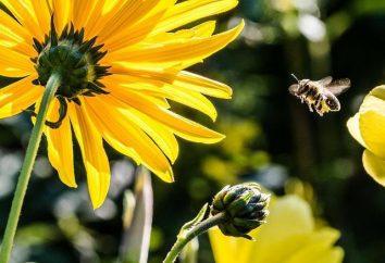 Pożytecznych owadów. Biedronka, chrząszcz, Pszczoła, lacewing. Obrońcy ogród i ogród warzywny