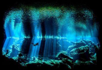 La beauté étonnante: les gagnants du concours de photographie sous-marine