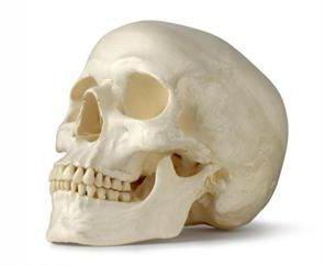 Struktura ludzkiej głowy. Sama natura myśli …