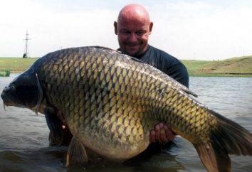 En esa carpa captura para atrapar un gran pez