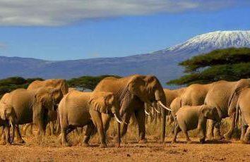 Drapeau du Kenya et son importance
