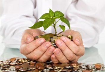 A ideia de negócio com um investimento mínimo – o início de uma longa jornada
