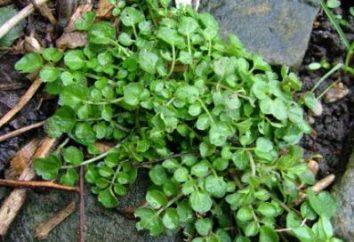 Como se livrar do viscoso no jardim: dicas para jardineiros