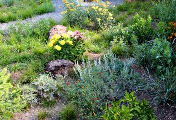 Une variété de plantes. Quelle est la diversité des espèces végétales