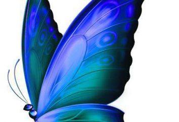 Farfalla vela, descrizione, specie caratteristiche