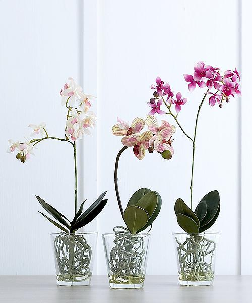 Vasi di orchidee che cosa dovrebbe essere orchidee in for Vasi per orchidee ikea