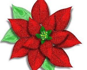 Christmas kwiat – Christmas star