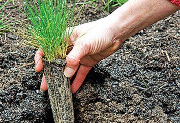 Fazer o jardim bonito. plantio grama gramado e cuidados