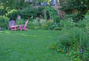 Jak zrobić trawnik w domku? Kilka porad