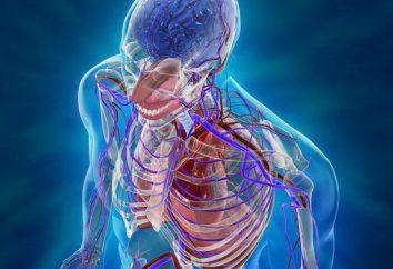 Przegląd ludzkiego ciała: struktura i funkcja systemu. W jaki sposób osoby