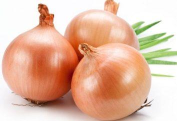 Krankheiten der Zwiebeln Wie kann man die Ernte nicht verlieren?