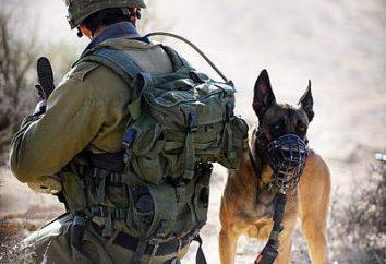 Wie Tiere Menschen in der Zeit des Krieges helfen? Hunde – WWII Helden
